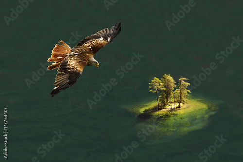 Red kite flying over lake with island Poster