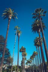 Palms of Beverly Hills © nata_rass