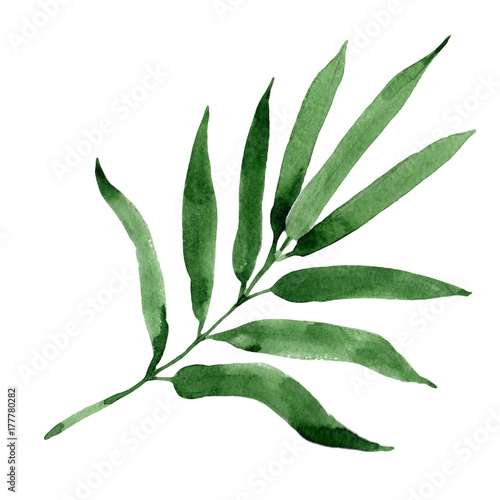 Tropical leaves bamboo tree in a watercolor style isolated. Aquarelle wild leaves for background, texture, wrapper pattern, frame or border. - 177780282