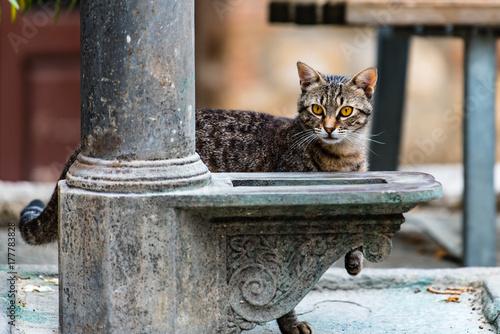 Deurstickers Toscane Tuscan cat behind lamp post.