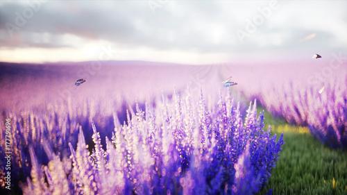 Fotobehang Lichtroze butterflies in lavender field. concept of nature. 3d rendering.