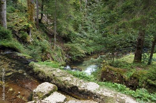 Papiers peints Rivière de la forêt Jolis paysages