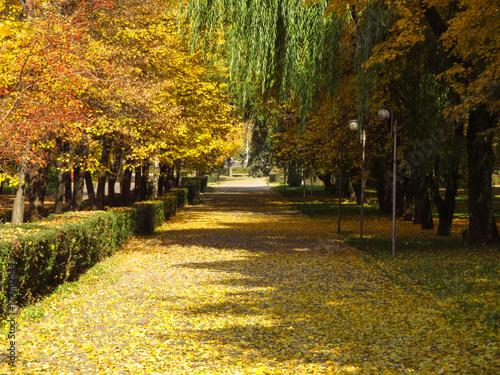 Aluminium Herfst Golden autumn alley