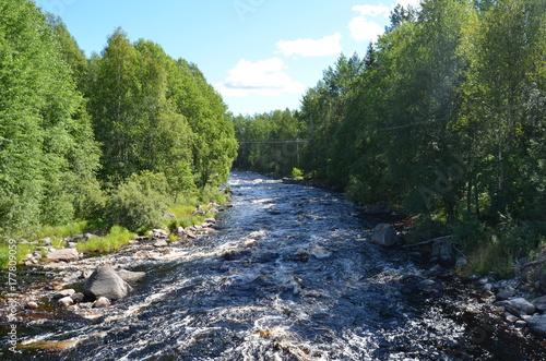 Papiers peints Rivière de la forêt forest river