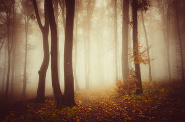 autumn landscape, trees in misty woods