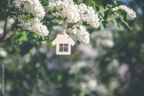The symbol of the house among the branches of the white lilac Plakat