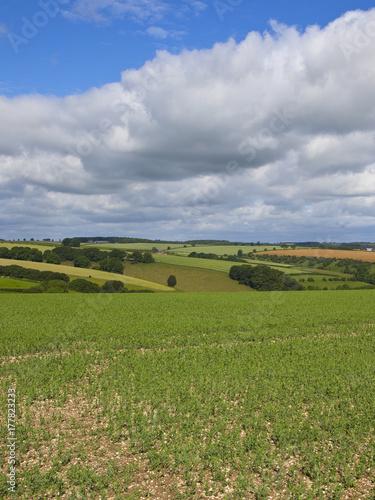Fotobehang Donkergrijs pea crop and hills