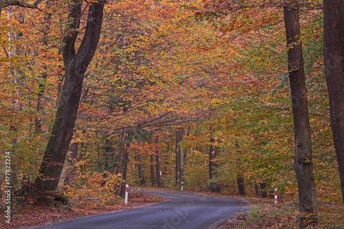 Fotobehang Weg in bos Las jesienią.