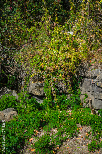 Cracked rocks and plant overgrowth Poster