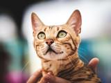 Close-up of purebred cat - 177836099
