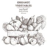 Harvest of vegetables in the basket. Hand drawn vector illustration. Engraved style. - 177843078