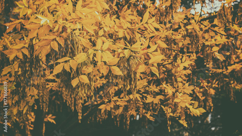 Aluminium Herfst Yellow autumn leaves on trees