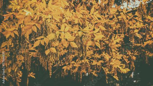 Papiers peints Automne Yellow autumn leaves on trees
