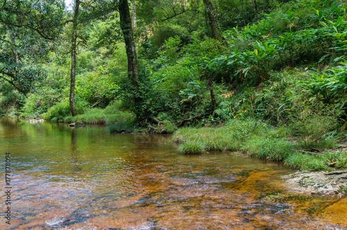 Papiers peints Rivière de la forêt Beautiful nature landscape. River in the forest