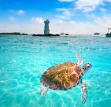 Isla Mujeres lighthouse El Farito snorkel point - 177888294