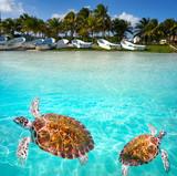 Mahahual Caribbean beach turtle photomount - 177889839