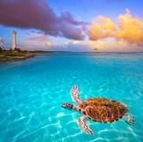 Mahahual Caribbean beach turtle photomount - 177889883