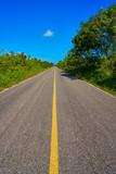 Riviera Maya jungle rainforest road - 177890256