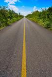 Riviera Maya jungle rainforest road - 177890284