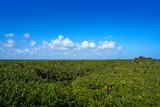 Mahahual Caribbean jungle in Costa Maya - 177890431