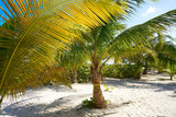 Mahahual Caribbean beach in Costa Maya - 177890487