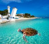 Puerto Morelos turtle photomount Riviera Maya - 177897442