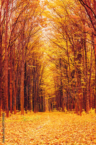 Foto op Canvas Baksteen Photo of orange autumn forest with leaves and road