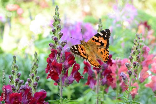 Fotobehang Vlinder Schmetterling 250
