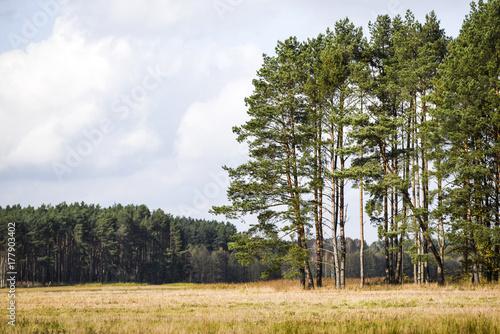 Fotobehang Lente Forest and meadow in autumn season, autumn landscape.
