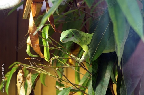 Fotobehang Kameleon Animaux divers