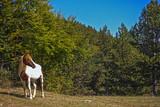 cavallo al pascolo 162