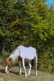Cavallo al pascolo 163