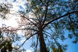 tree cloud trunk
