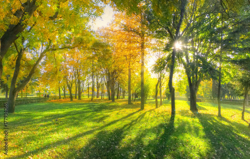 Foto op Canvas Herfst Beautiful autumn background with sunlight and shadows in a park, in fall season