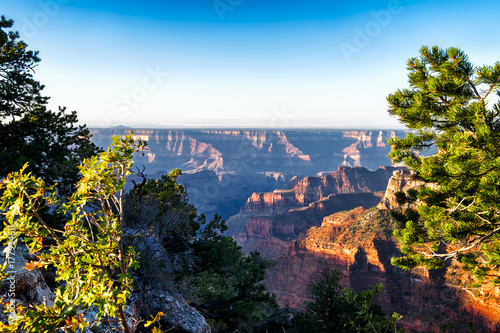 Grand Canyon beautiful sunrise view framed by close up trees in the foreground Poster