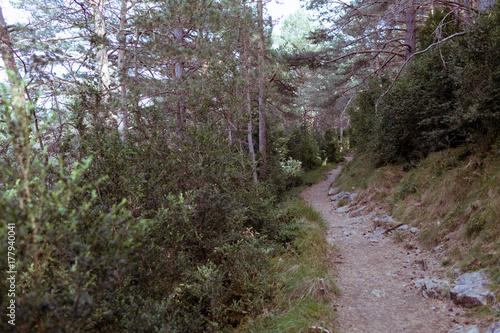 Aluminium Weg in bos camino en bosque de arboles verdes