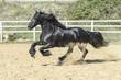 cavallo - 177948403