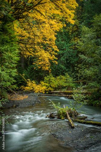 Papiers peints Rivière de la forêt Fall In The Pacific Northwest