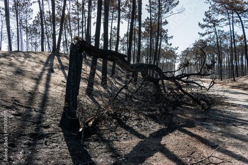 Foto op Plexiglas Weg in bos Fires in Portugal - Leiria pine forest great fire.