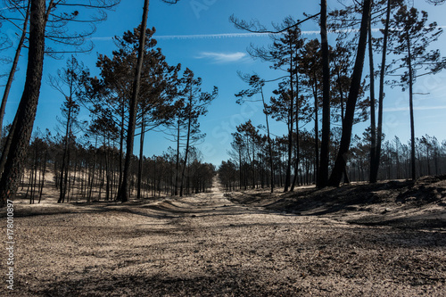 Papiers peints Cappuccino Fires in Portugal - Leiria pine forest great fire.