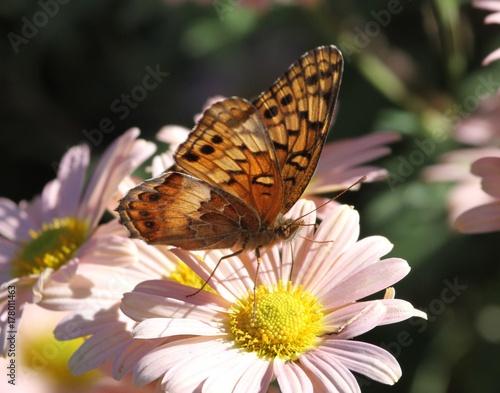 Fotobehang Vlinder Winged Wonder