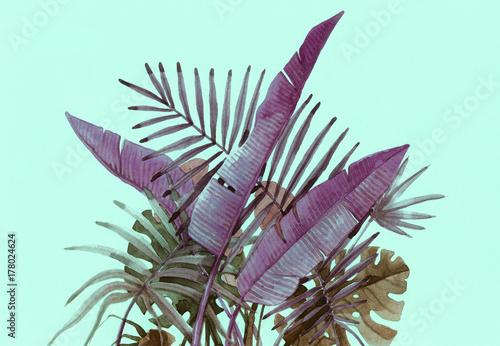 Plants. watercolor illustration - 178024624