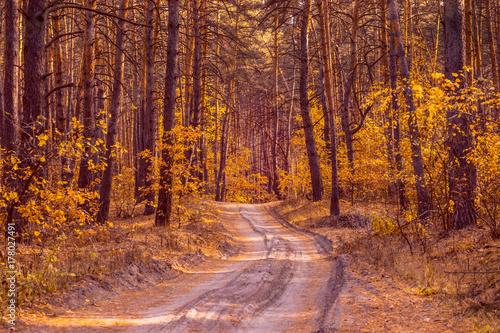 Papiers peints Route dans la forêt path through the bright autumn forest