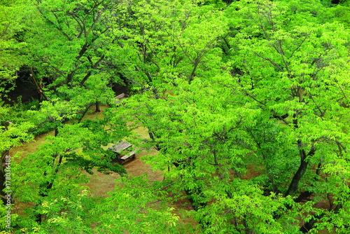 山の公園の木々の風景15 Poster
