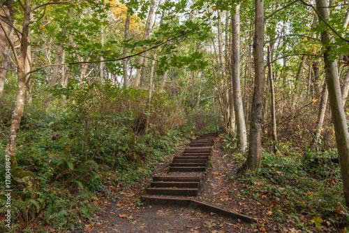 Papiers peints Route dans la forêt stairs in forest trail