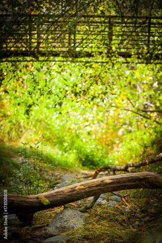 Fotobehang Lime groen Greenery Background