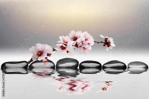 Fototapeta spa de piedras y agua con flor