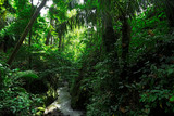 Fototapety Green wild jungle forest and flowing river