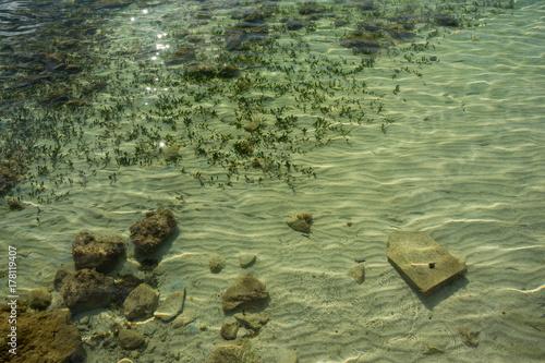 Papiers peints Olive Mallorca, Urlaub, Balearen, Spanien, Sonne, Meer, Mittelmeer, Strand, Erholung