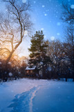 Beautiful winter sunset with trees in the snow - 178127461